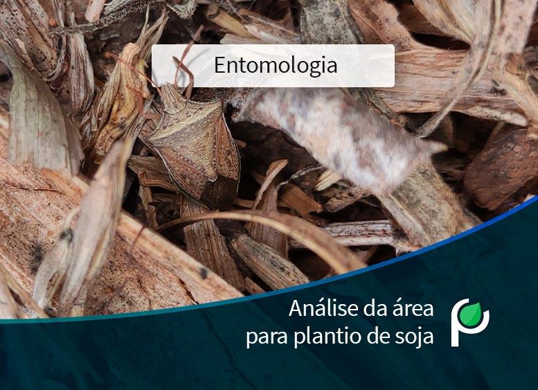 A importância de análise da área para plantio de soja